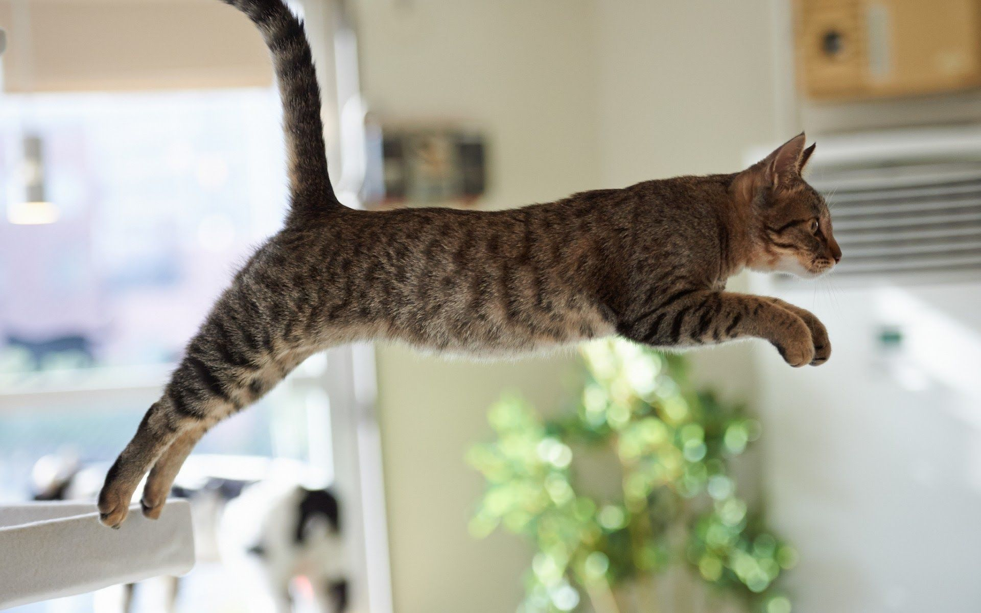 Funny Cats Jump Fail Part 1 (With images) Jumping cat