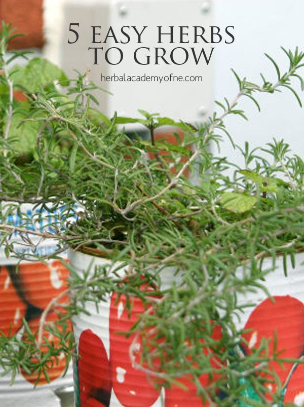 Vegetable Garden Ideas New England 5 easy herbs to grow | herbal academy of new england | {lifestyle