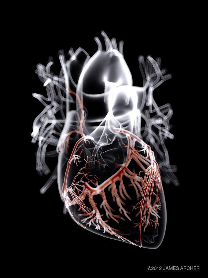 James Archer Blue Anatomía del corazón | ILUSTRACIONES ANATOMIA ...