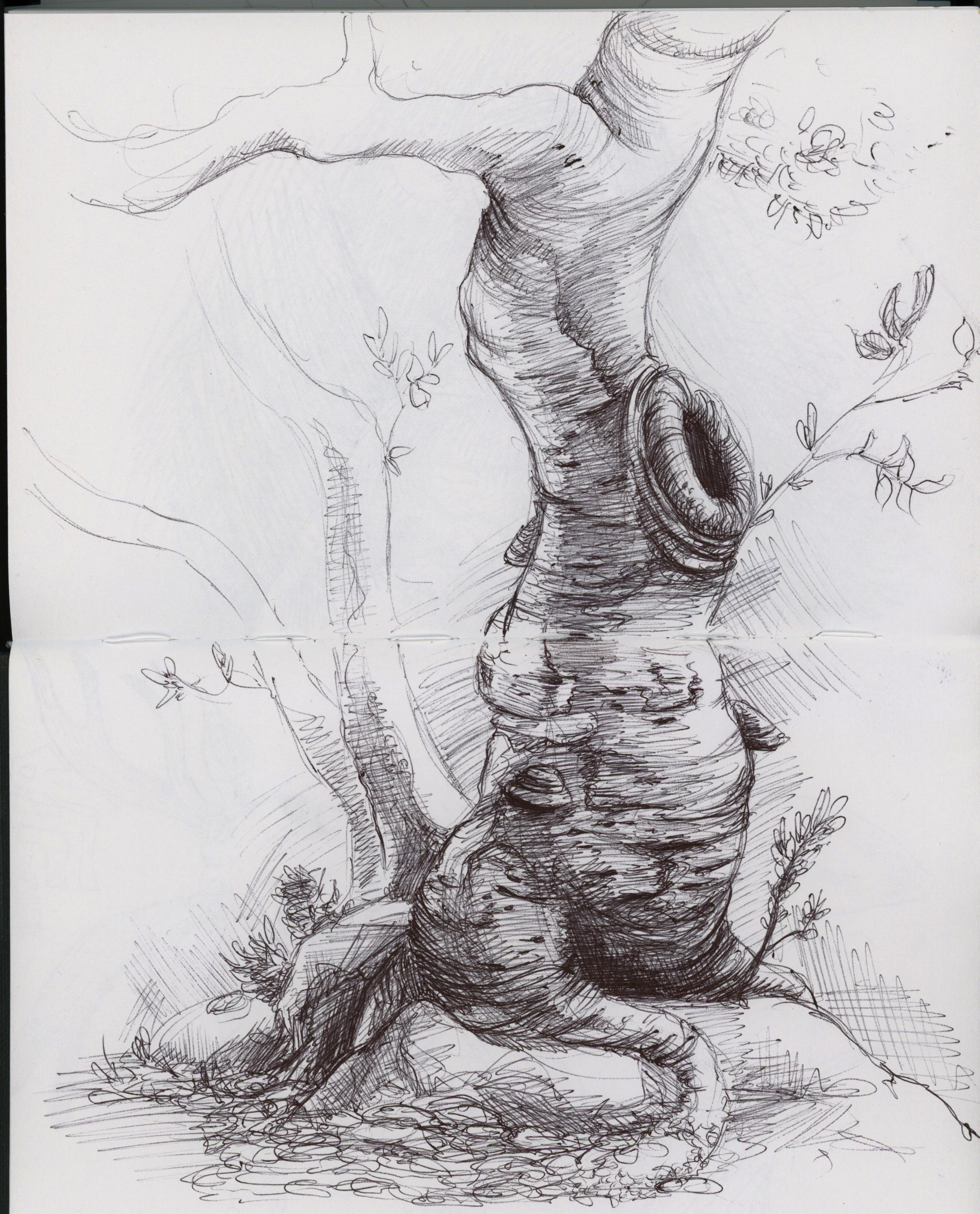 Image result for sketches of trees pencil art pencil sketch drawing ink pen drawings