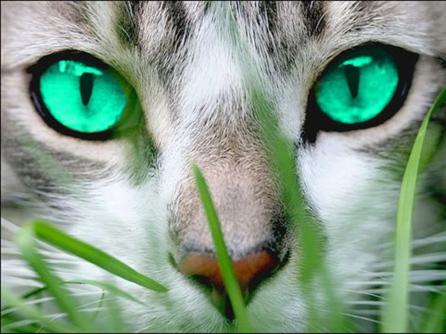 what s your warrior cat name based off the books by erin hunter which clan do you belong to what is your name chosen by starclan