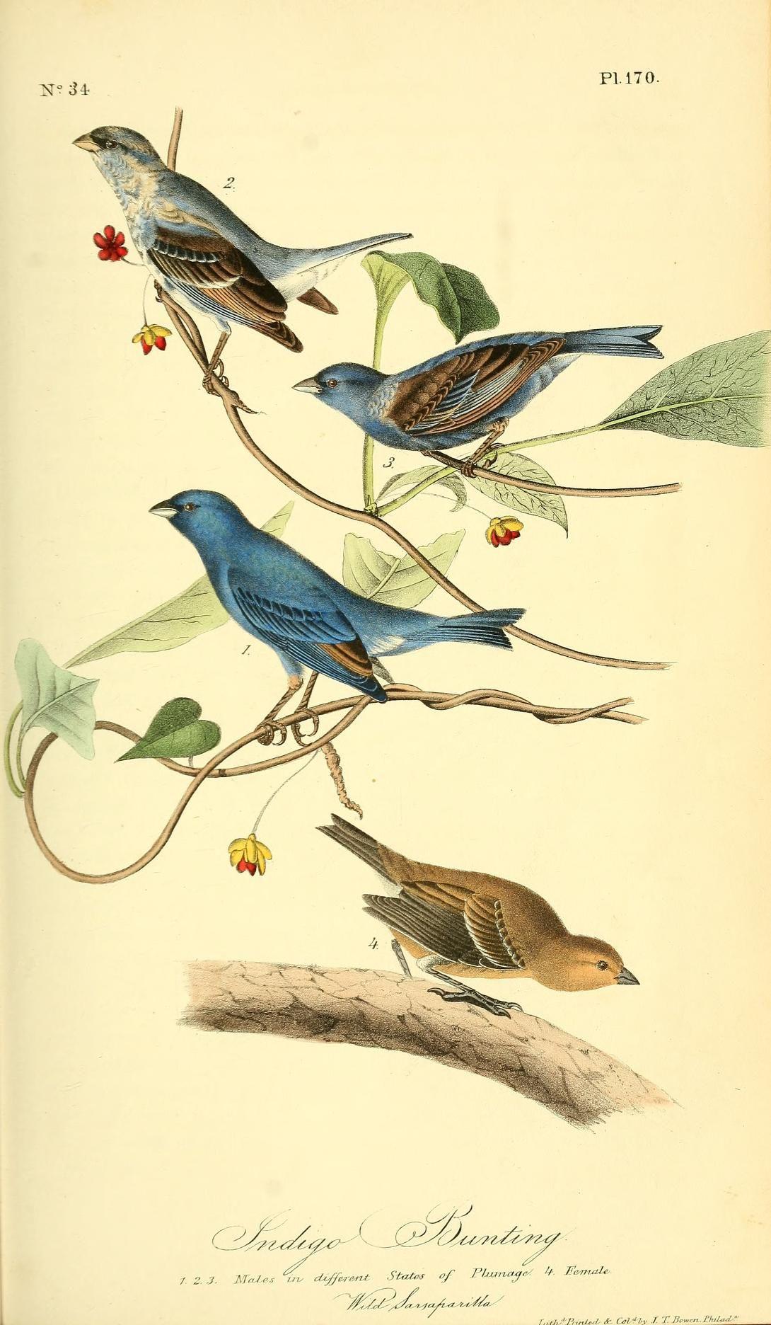 V 3 The Birds Of America John J Audubon 1840 Biodiversity