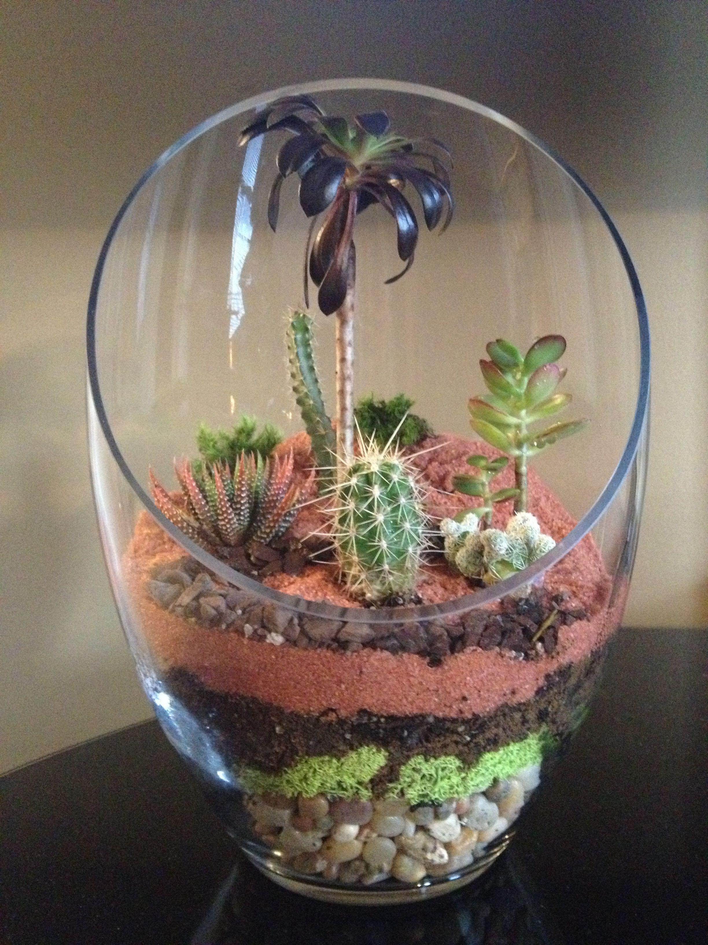 Homemade Terrarium Layers Cacti Beautiful For The