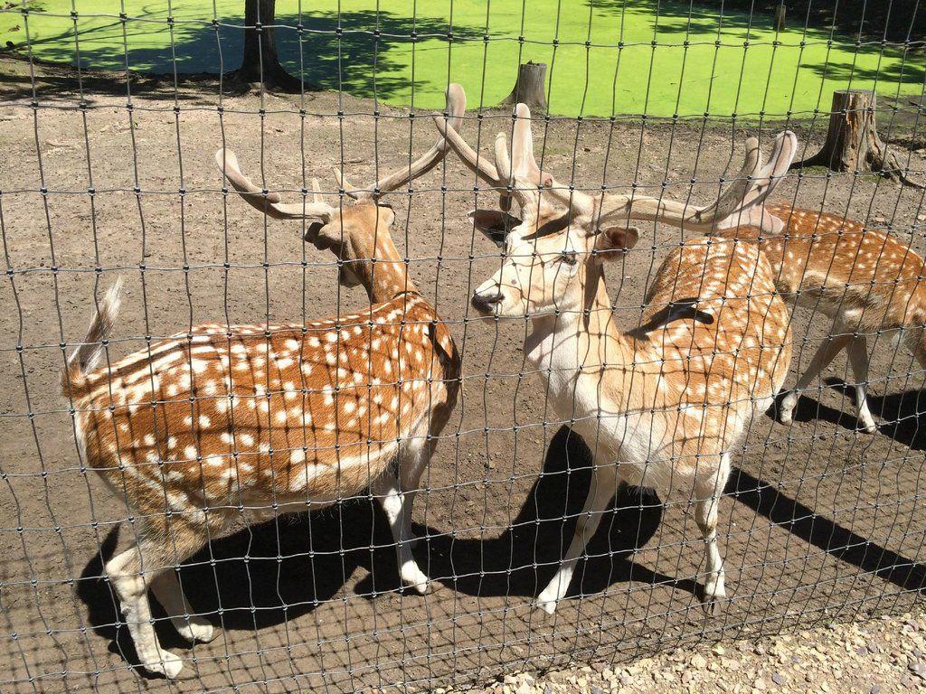 Wisconsin Deer Park (Wisconsin Dells): Address, Phone Number, Zoo Reviews - TripAdvisor