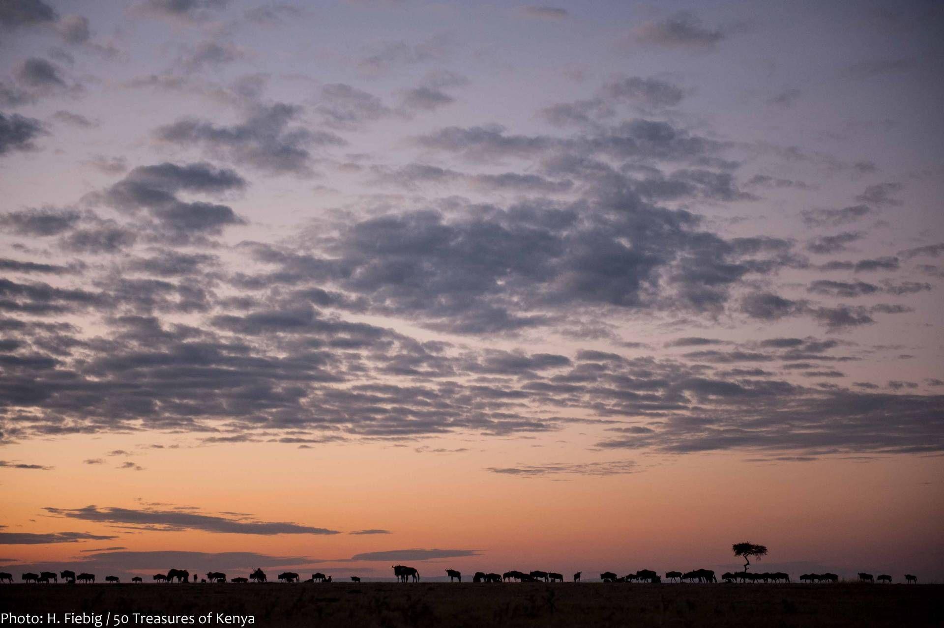 50 Treasures of Kenya - Masai Mara & Trans Mara