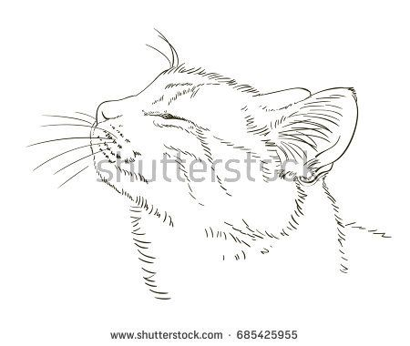 Sketch Of Cat S Head In Profile With Closed Eyes From Pleasure Hand Drawn Vector Illustration Hand Drawn Vector Illustrations Closed Eyes Profile Drawing