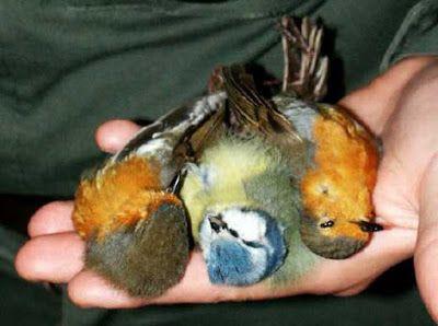 Petali di ciliegio...per coltivare la speranza: In difesa degli animali: STOP alla caccia!