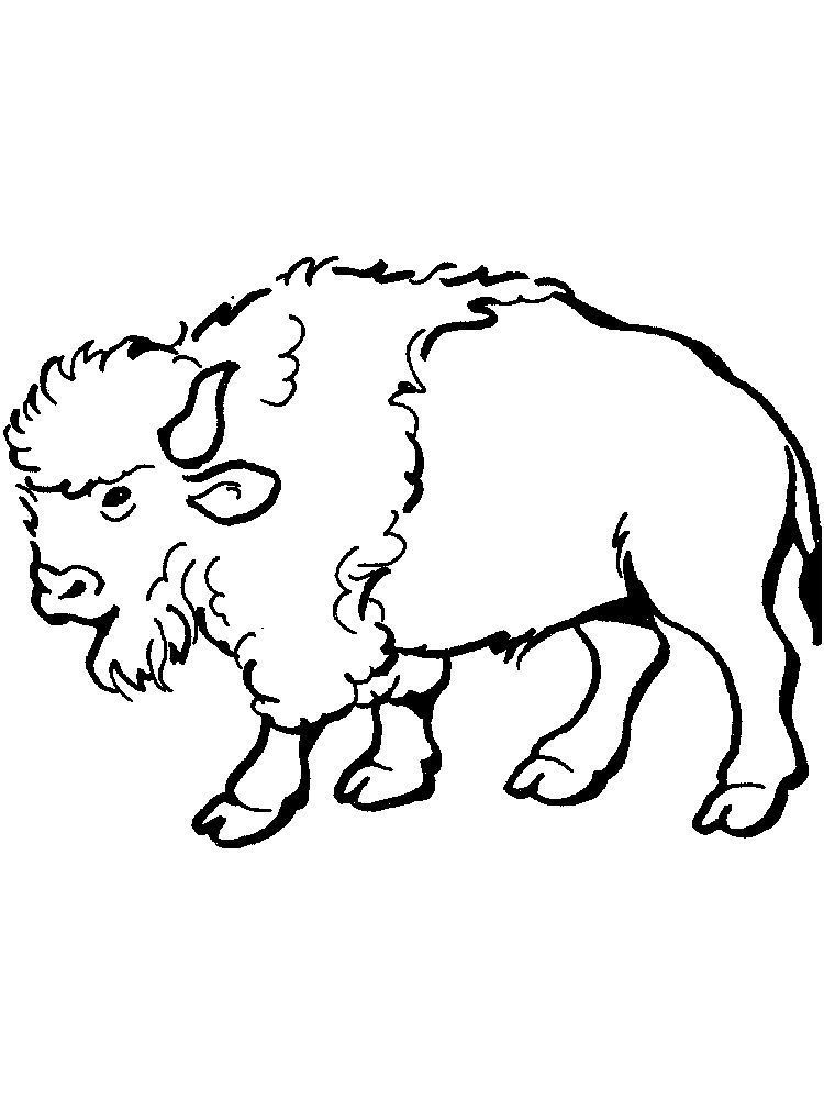 Small Buffalo Coloring Pages Buffalo Is A Cattle Mammal Inhabit Many Lands In The World Especially Asia Animal Coloring Pages Mammals Cartoon Coloring Pages
