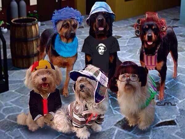 Pin De Nayeli Mafiosa En Perritos Y Massssss Memes Perros Meme Gracioso Humor Divertido Sobre Animales