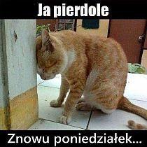 Pin von Alexandra auf Humor   Śmieszne zwierzęta humor ...
