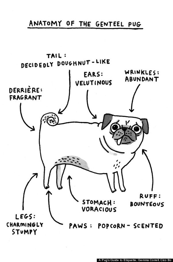 Gemma Correll Has A Few Ideas About Pug Etiquette With Images