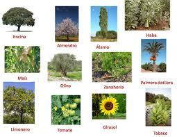 Imagenes De Plantas Industriales Buscar Con Google Flower Garden Plants Flowers
