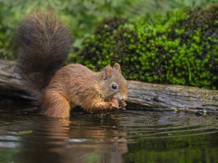 Wet squirrel Photo by Nico van Gelder — National Geographic Your Shot