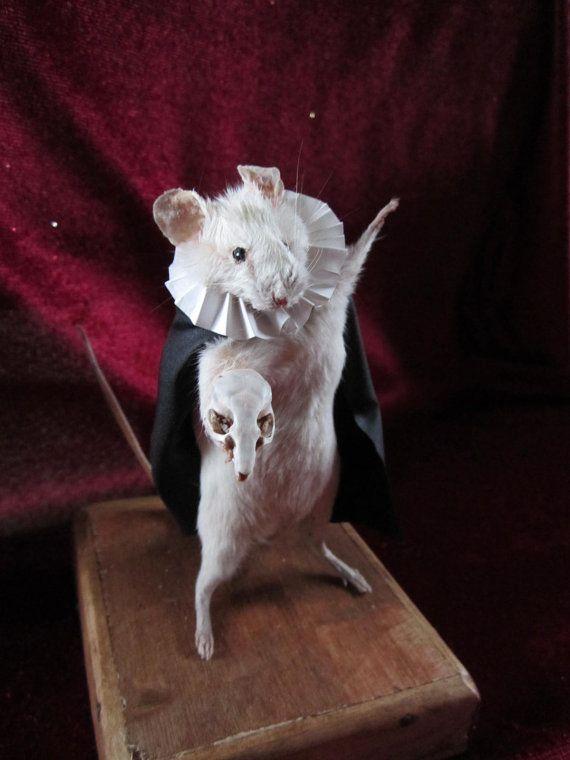 taxidermie rat
