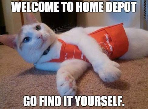 Funny Clean Memes For Wednesday Funny Cat Pictures Funny Animals Funny Animal Pictures