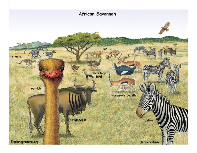 African grasslands... Ozzy's Preschool Park Savannah