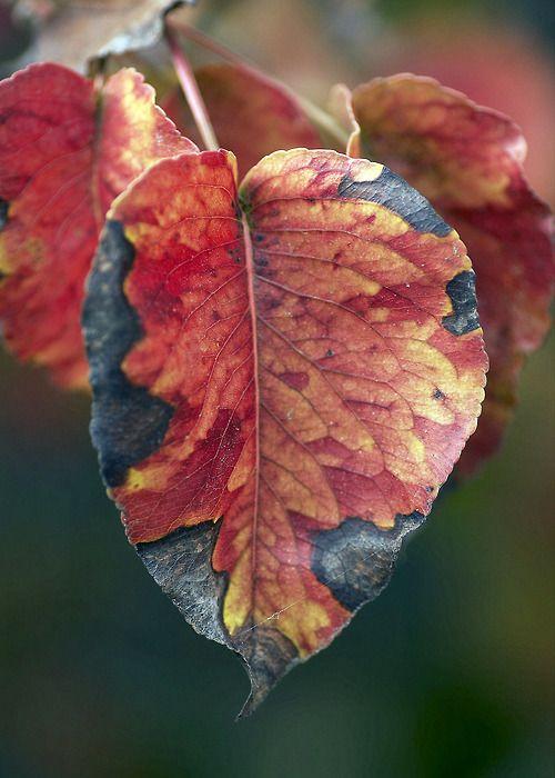 Lo que cuenta el otoño