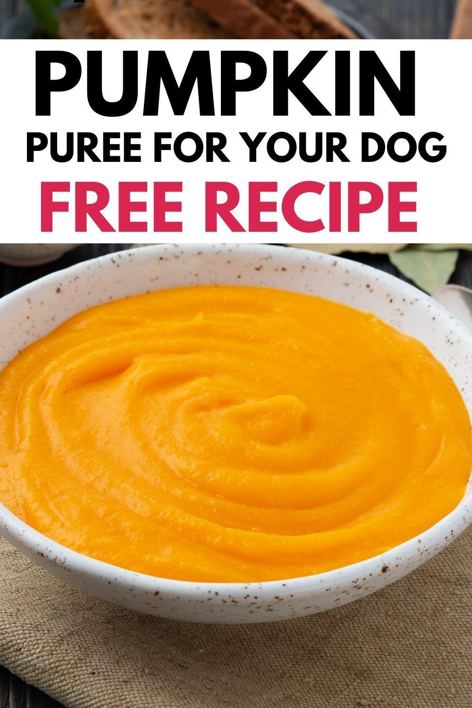 Pumpkin Puree For Dogs Recipe Homemade Dog Cookies Dog Treat