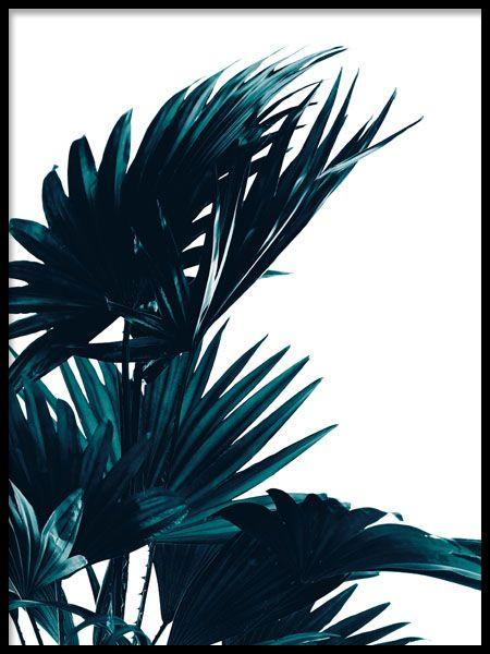 Poster With Palm Leaves Botanical Photos Poster Prints Leaf Wall Art Palm Leaves