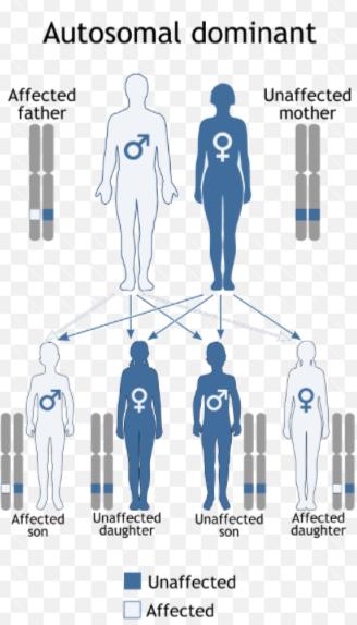 Prader Willi Syndrome Diagram