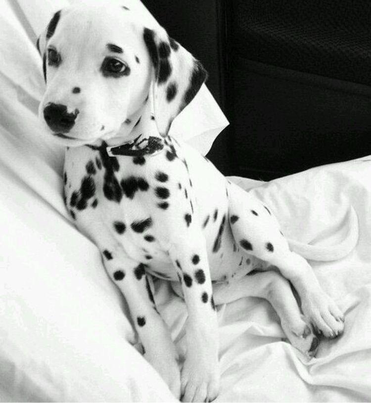 Pin by Michele Daukaus on Puppies! Animals, Cute animals