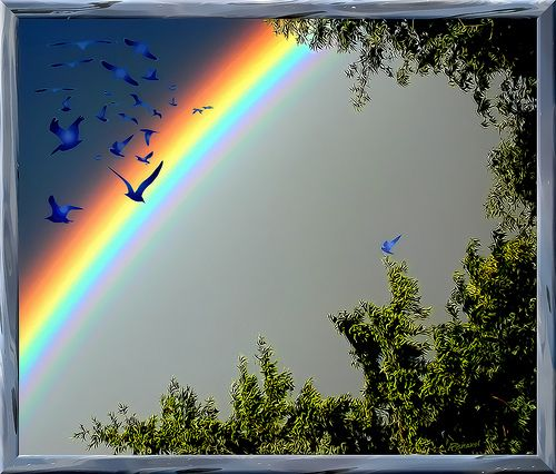 Over The Rainbow Bluebirds Fly Google Search Blue Bird Nature Over The Rainbow
