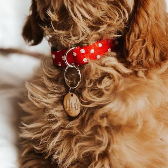 Red and White Polka Dot Dog Collar, Red Dog Collar, Red and White, Cat Collar, Red Cat Collar – Sabri
