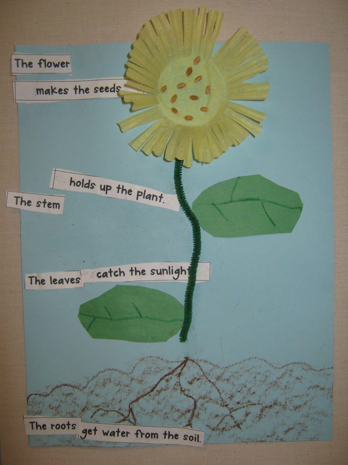 Love This With Kid Written Labels For Parts Of Plant