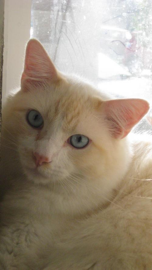 Adopt Levi On Maci