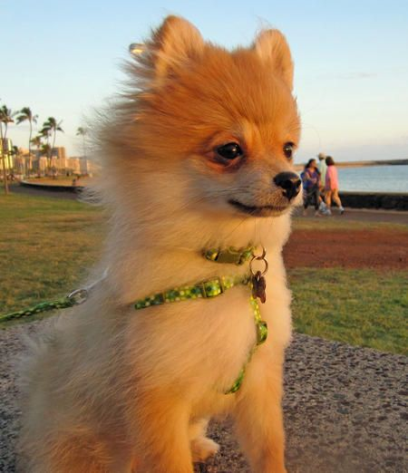 Aloha My Name Is Luna Bear And I Live In Honolulu Hawaii From