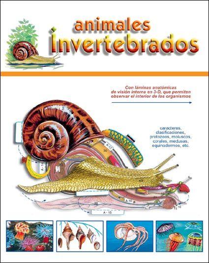 Los Invertebrados A Color Actiludis Vertebrados E Invertebrados Actiludis Lap Book
