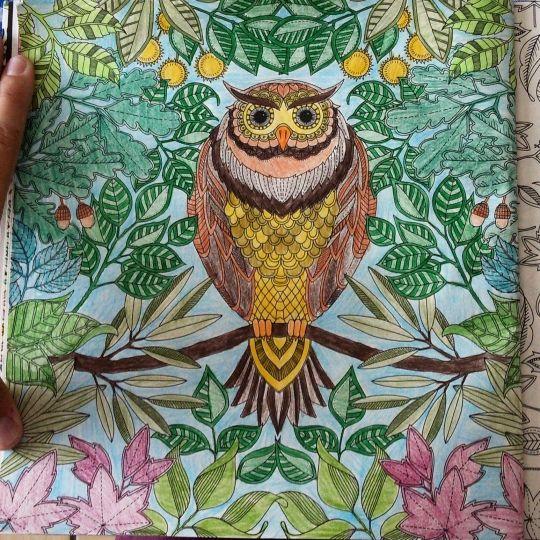 Johanna Basford   Colouring Gallery   birds   Pinterest   Johanna ...
