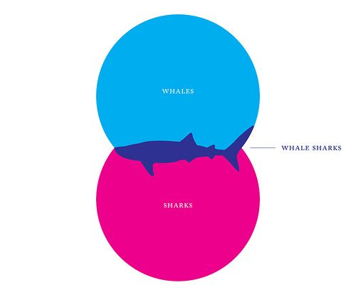 Creative Venn Diagram Design What Are Whale Sharks Design