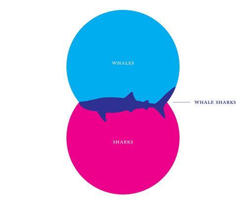 Creative venn diagram design. What are whale sharks? | Design ...