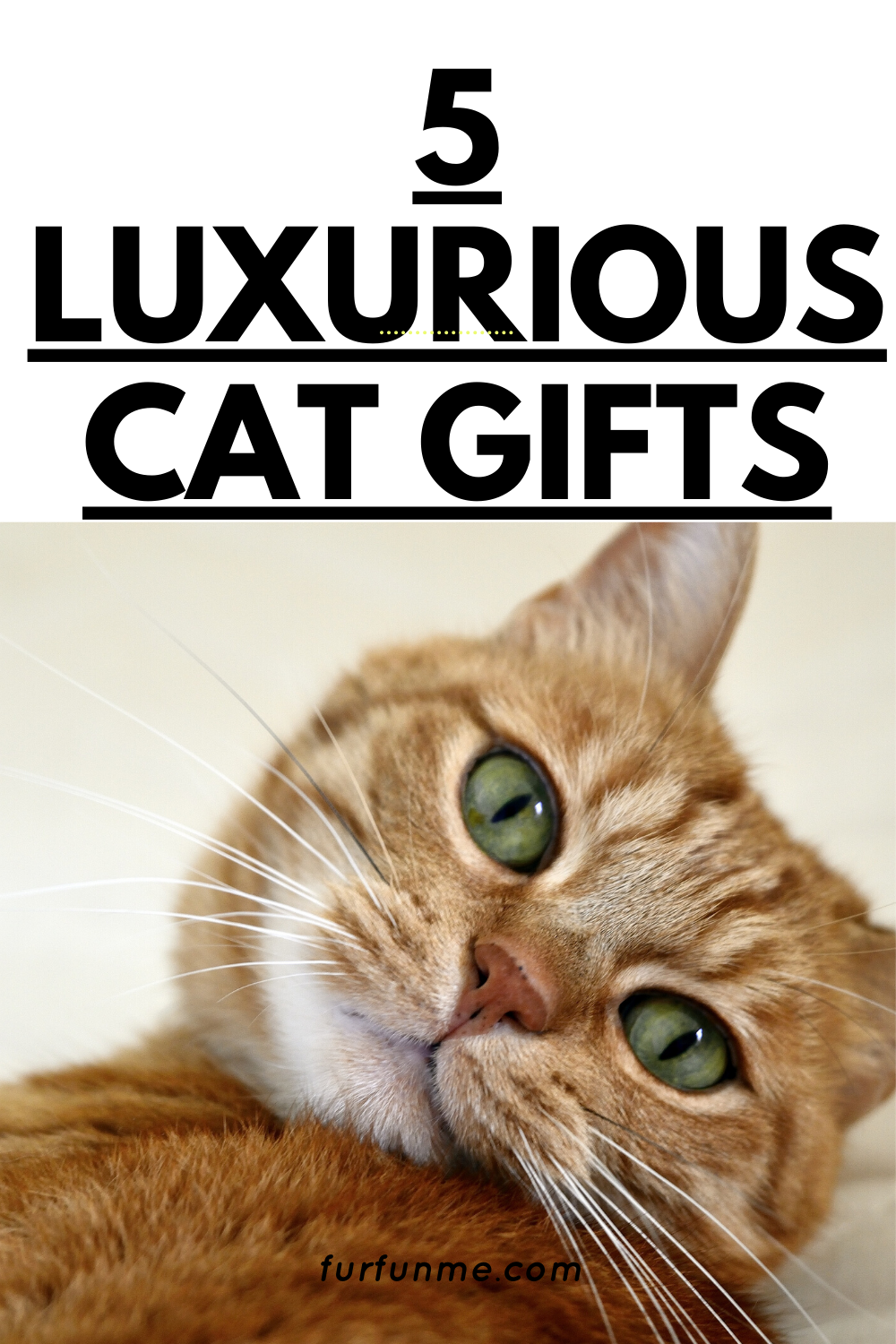 Luxury Gifts For Your Cat In 2020 Cat Illnesses Cat Remedies Cat Ailments