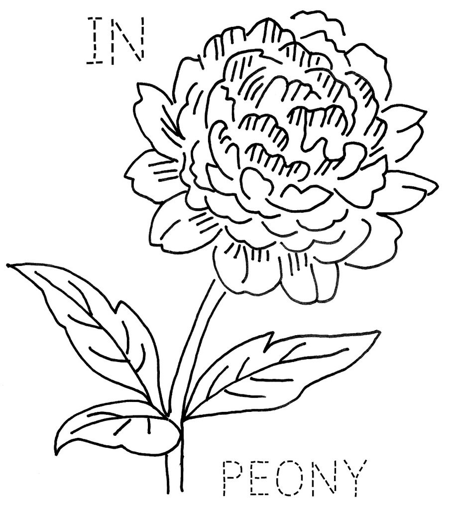 Montana state flower coloring page - Indiana Peony Turkeyfeathers