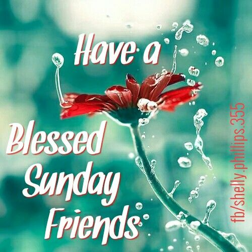 Happysunday Goodmorning Friends Love Beautiful Inspiration Awesome Flowers Nature Blessings Blessed Sunday Have A Blessed Sunday Blessed