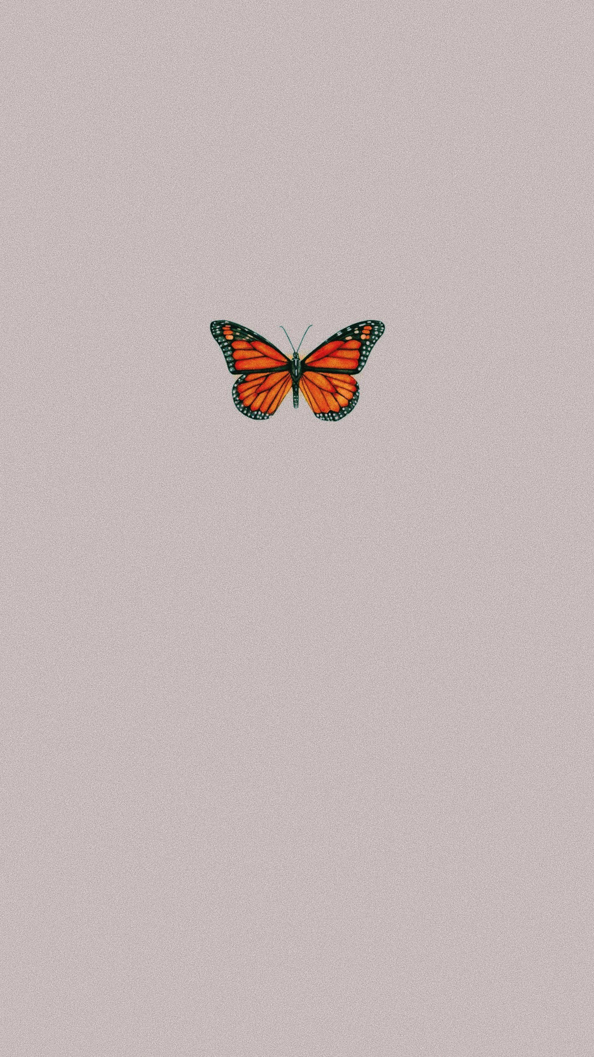 Vsco Lizzy0794 In 2020 Butterfly Wallpaper Iphone Pretty Wallpaper Iphone Butterfly Wallpaper