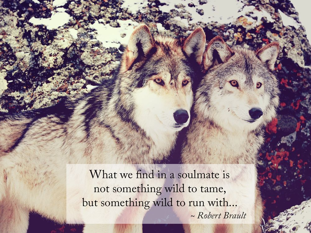 What we find in a soulmate