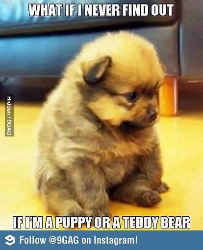 a7ca7d84a3dcf5792553e363bc71f1d7 what if ? puppy meme, memes and meme