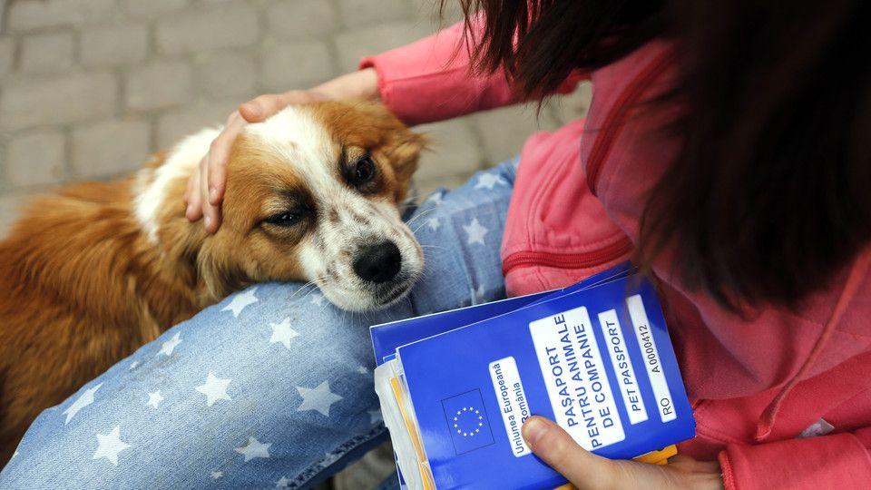 Aprovada criminalização dos maus tratos contra animais Já não era sem tempo...