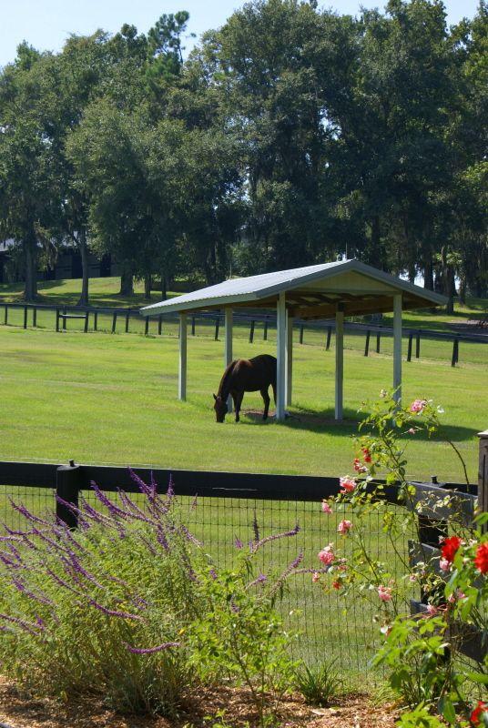 Ocala S 11 Acre Dream Farm Ocala Horse Properties Ocala Horse Farms For Sale Ocala Ranches For Sale Ocala Ho Horse Farms Horse Farms For Sale Horse Property