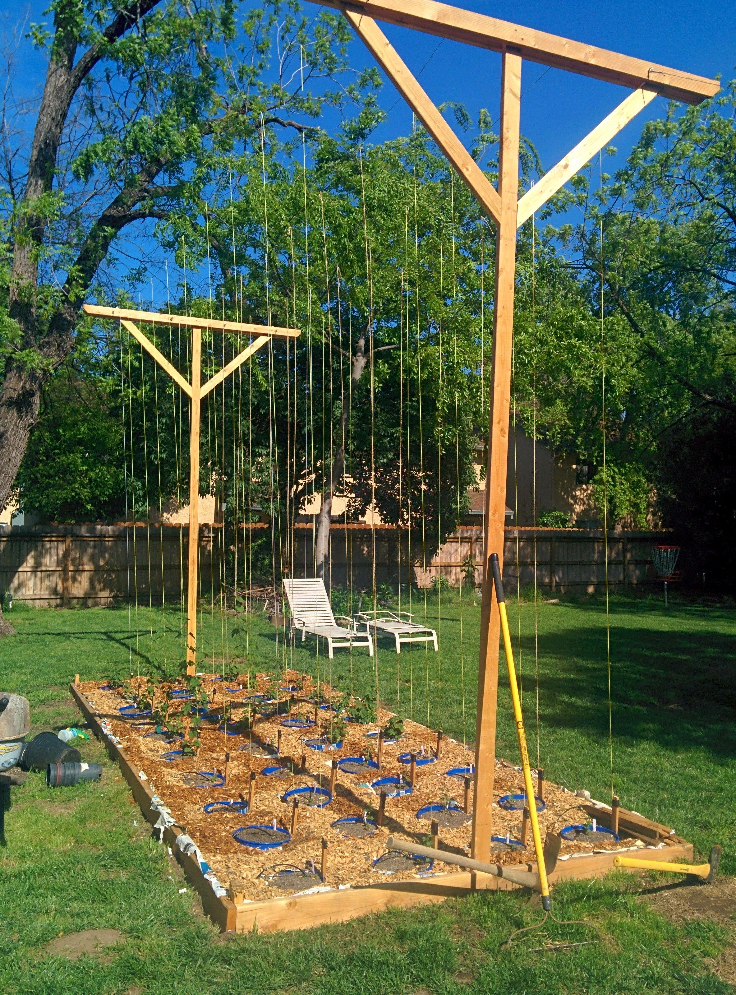 Hop Garden Build Hops Trellis Beer Garden Home Brewing 400 x 300