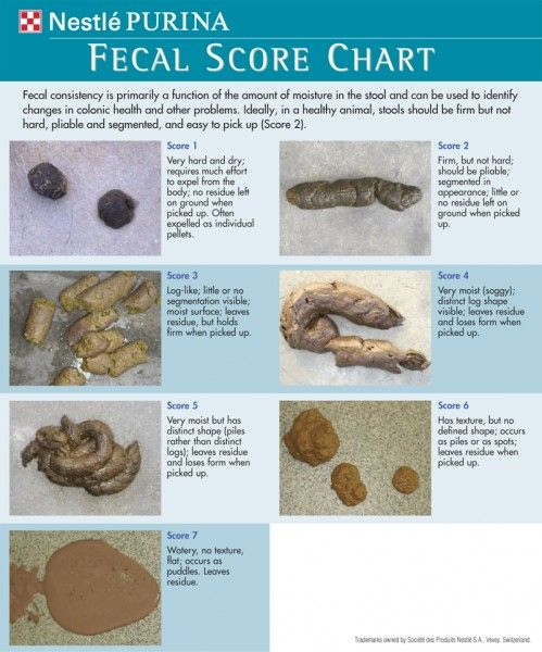 Poop Itu0027s part of the job You learn to wax lyrical about the - stool color chart