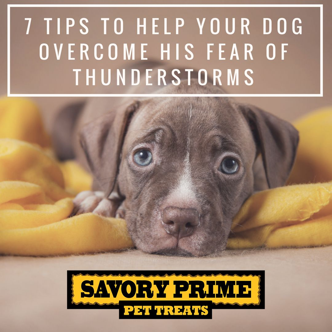 The Question Why Are Dogs Scared Of Storms Can Often Arise In The Minds Of The Dog Owners This Is Because Of The Lou Dogs Scared Of Thunder Dogs Dog Storms