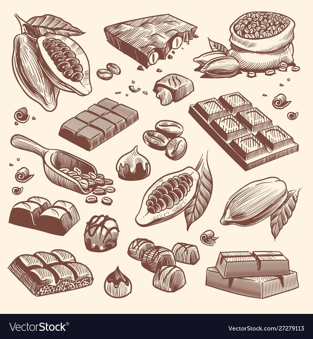 Sketch cocoa and chocolate cacao and coffee seeds vector