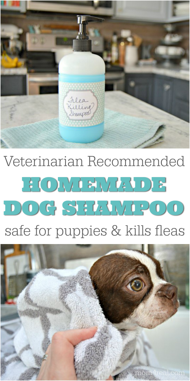 Homemade Pet Shampoo That Kills Fleas And Is Safe For Puppies In 2020 With Images Homemade Flea Shampoo Pet Shampoo Homemade Dog Shampoo