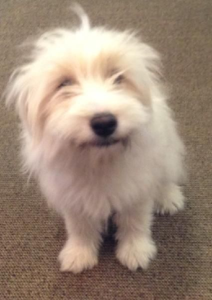 White Female Found In Stafford Area White Female Dog About 25 To