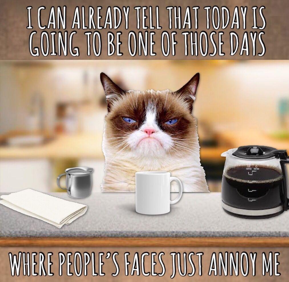 Grumpy Cat Morning Grumpy Cat Grumpy Cat Meme Morning Cat