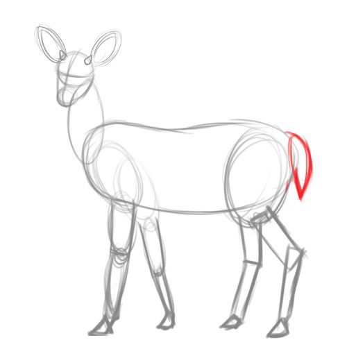 How To Draw A Deer Deer Drawing Drawings Painting Drawing